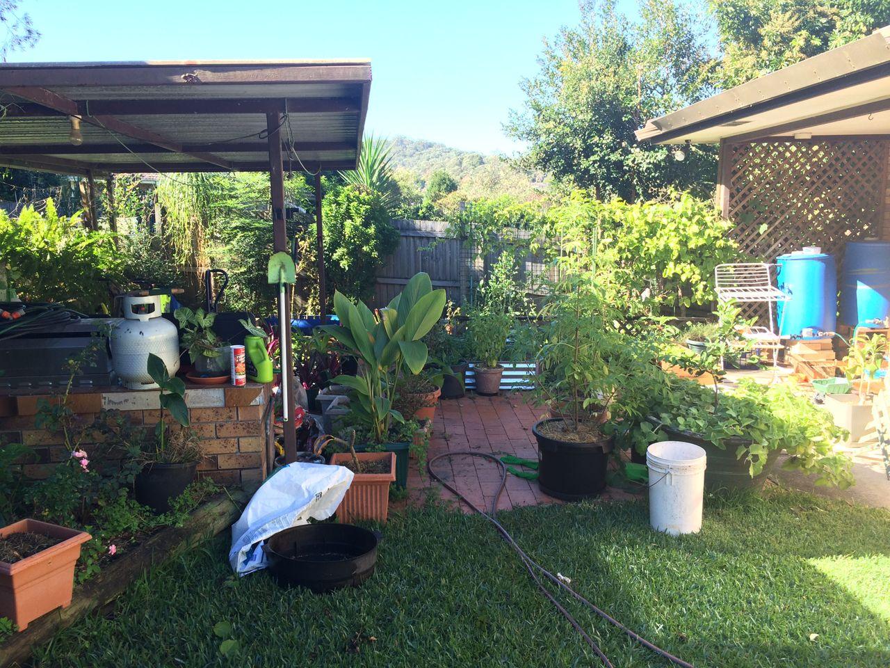 The old backyard