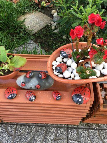 ☺️Familia de Coccinélidos(Mariquitas)🐞con Piedras/Family of Coccinellidae (Ladybugs) 🐞with Stones