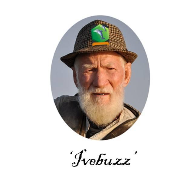 hivebuzz.jpg