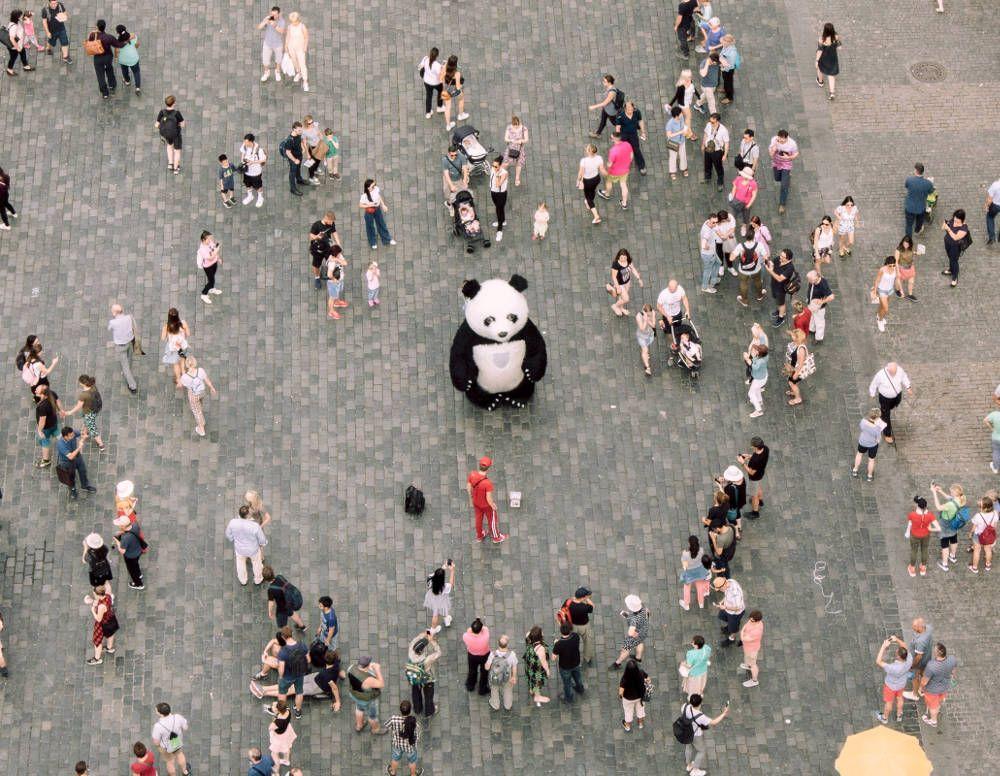 pexels_panda_crowd.jpg