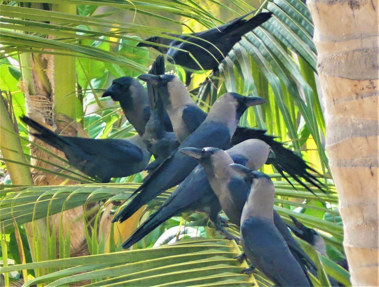 eolianpariah_crows.jpg