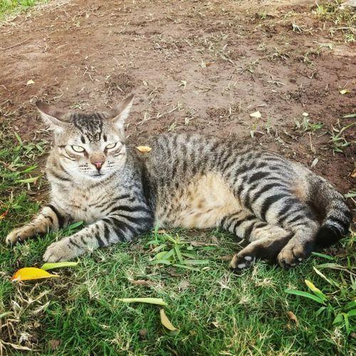 La historia de Luki: Algo más que un gato