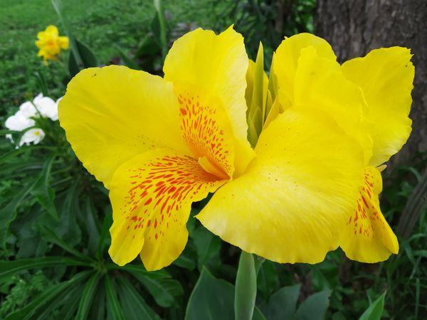 [ENG][ESP] Yellow Inspires Optimism and Happiness 🌻   Amarillo que inspira optimismo y felicidad 🌾