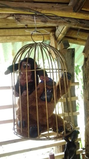 Monkeys in cages  -  Monos enjaulados