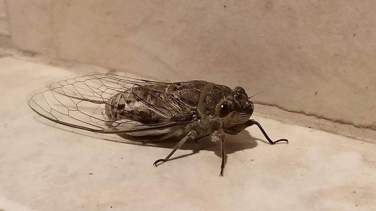 cicada_shadows_kohsamui99_272.jpg