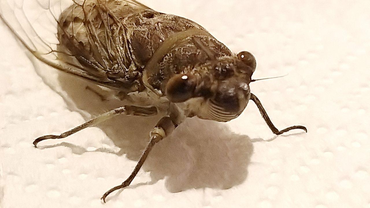 cicada_shadows_kohsamui99_327.jpg