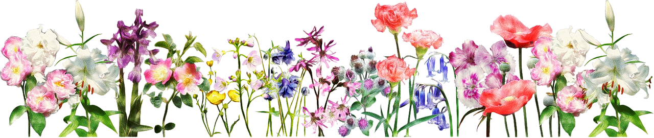 flowers_banner_170815_1092426.png