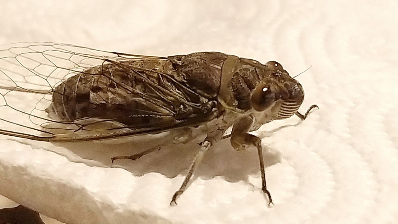 cicada_shadows_kohsamui99_319.jpg