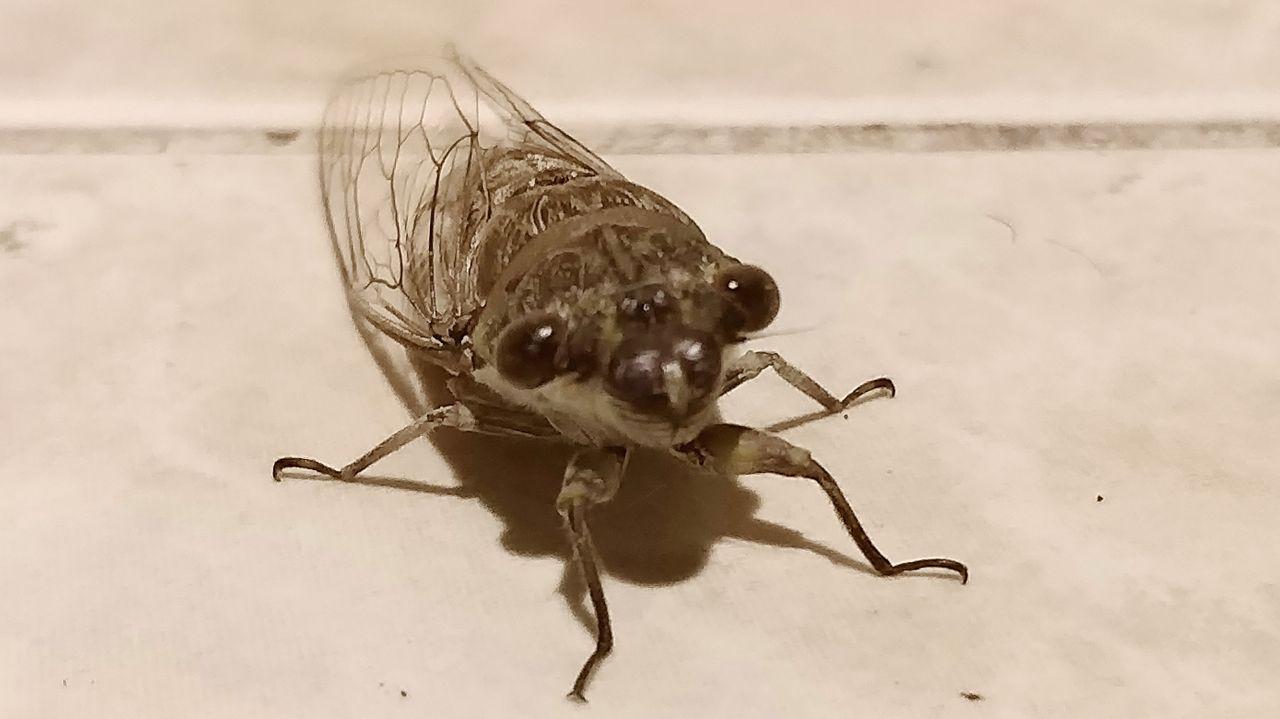 cicada_shadows_kohsamui99_298.jpg