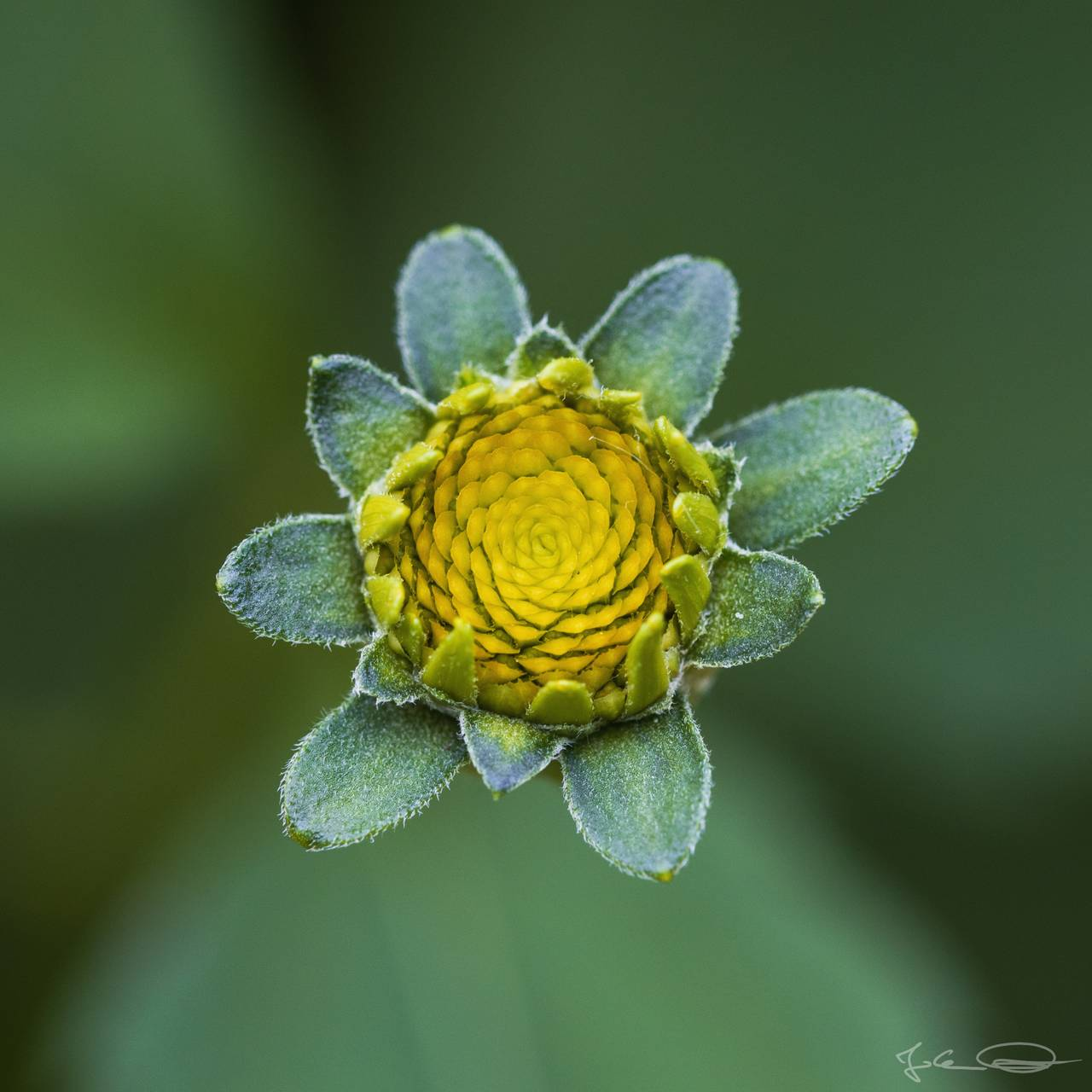 Hive AlphabetHunt Yellow Flower