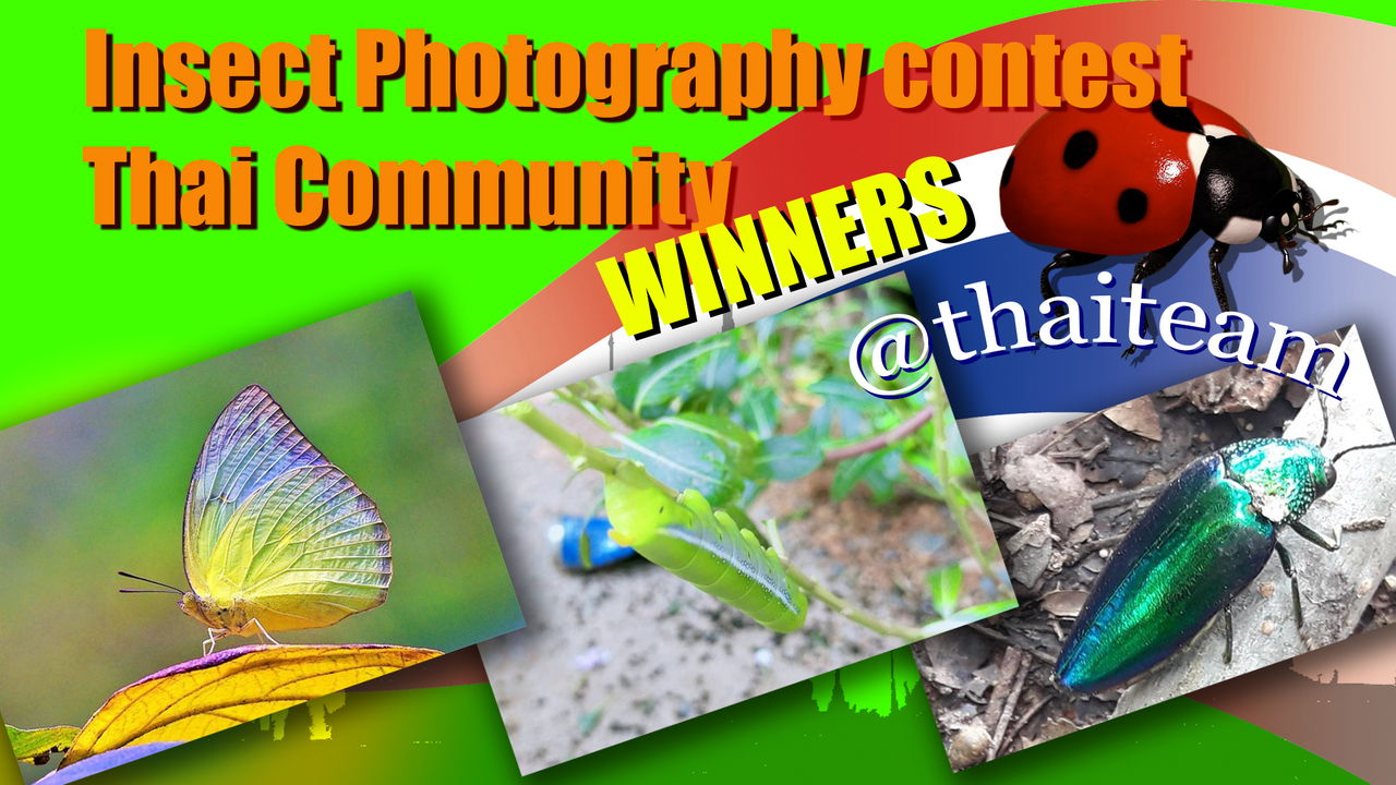 insect Photography winners.png