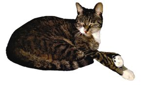 Cat Reclining