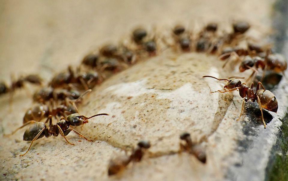 ants-4637999_960_720.jpg