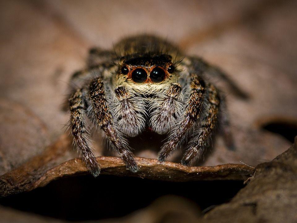 spider-1555216_960_720.jpg