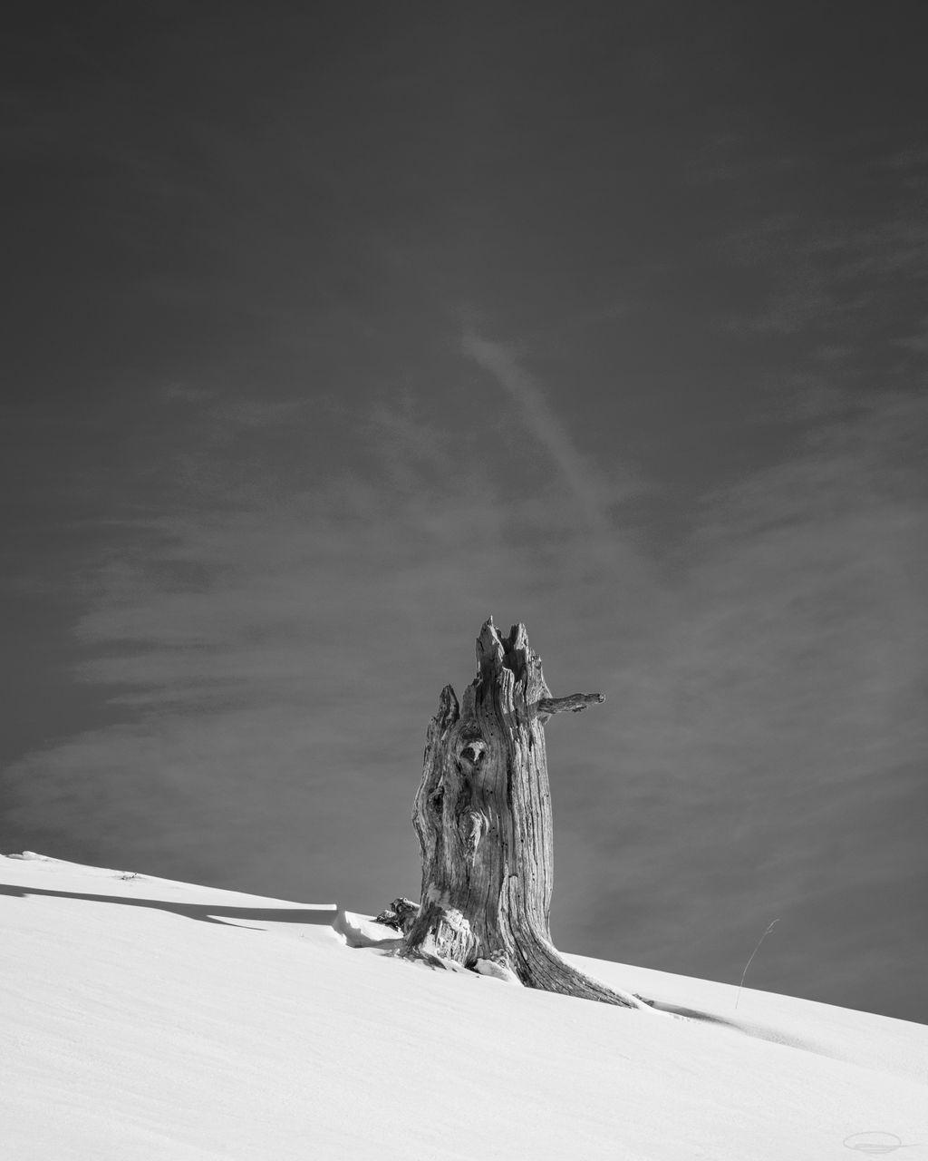 Tree Stump in the Snow on the Dobratsch Mountain - Monochrome