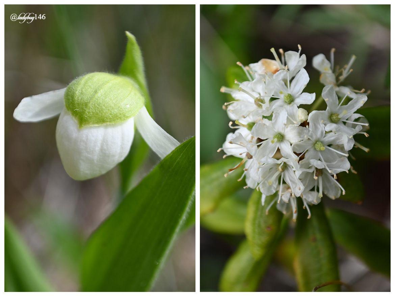 icefield parkway wild flowers (1).jpg