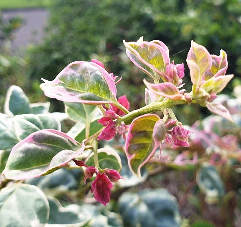 flower_95u.jpg