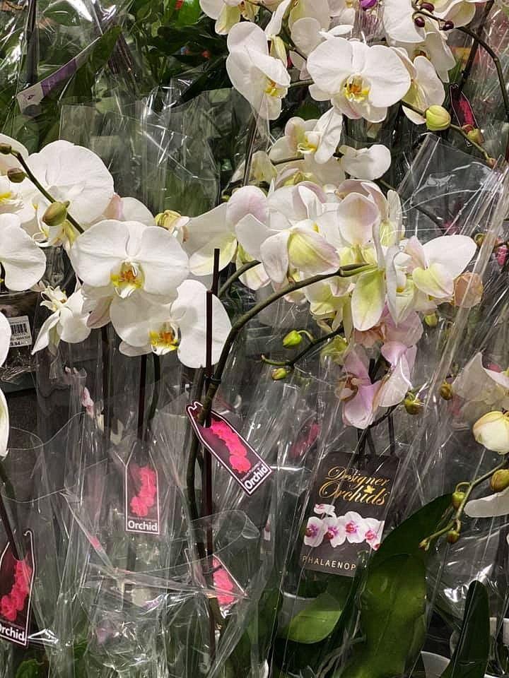 flower_21u.jpg