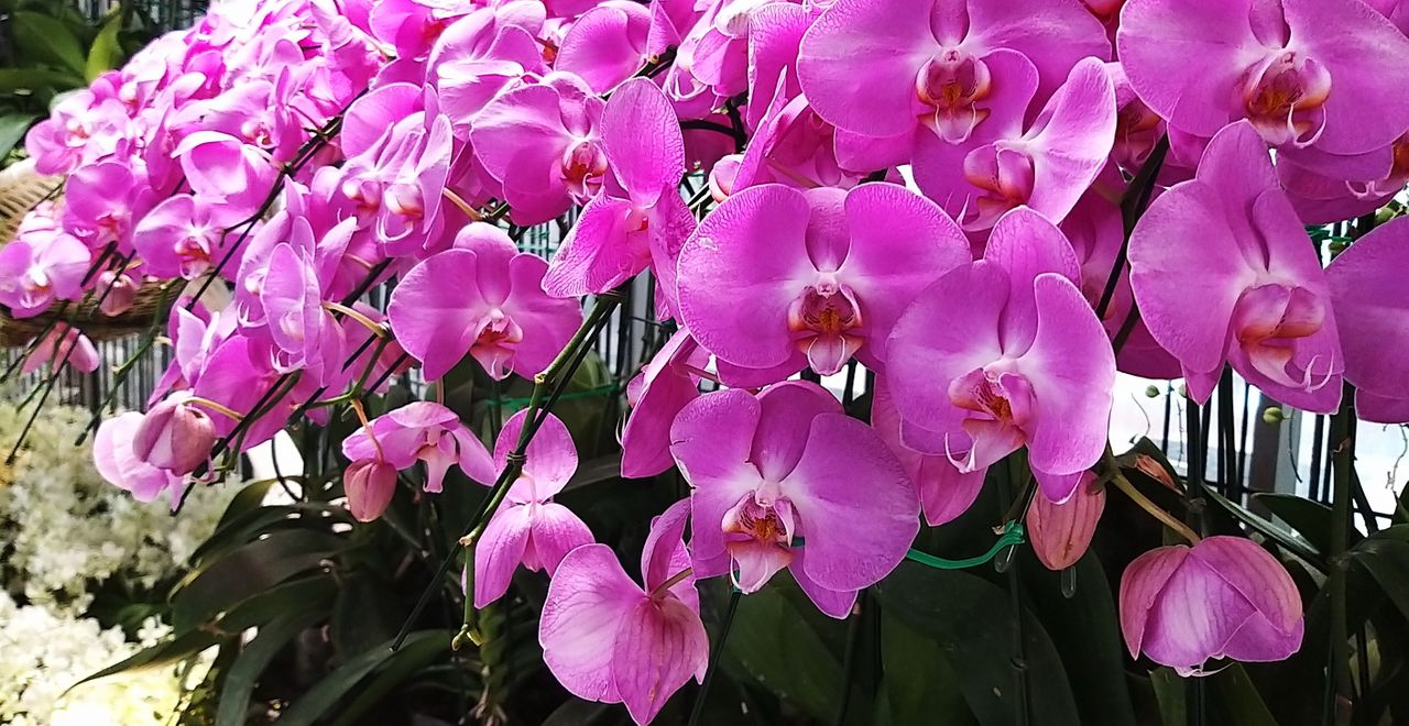 flower_30u.jpg