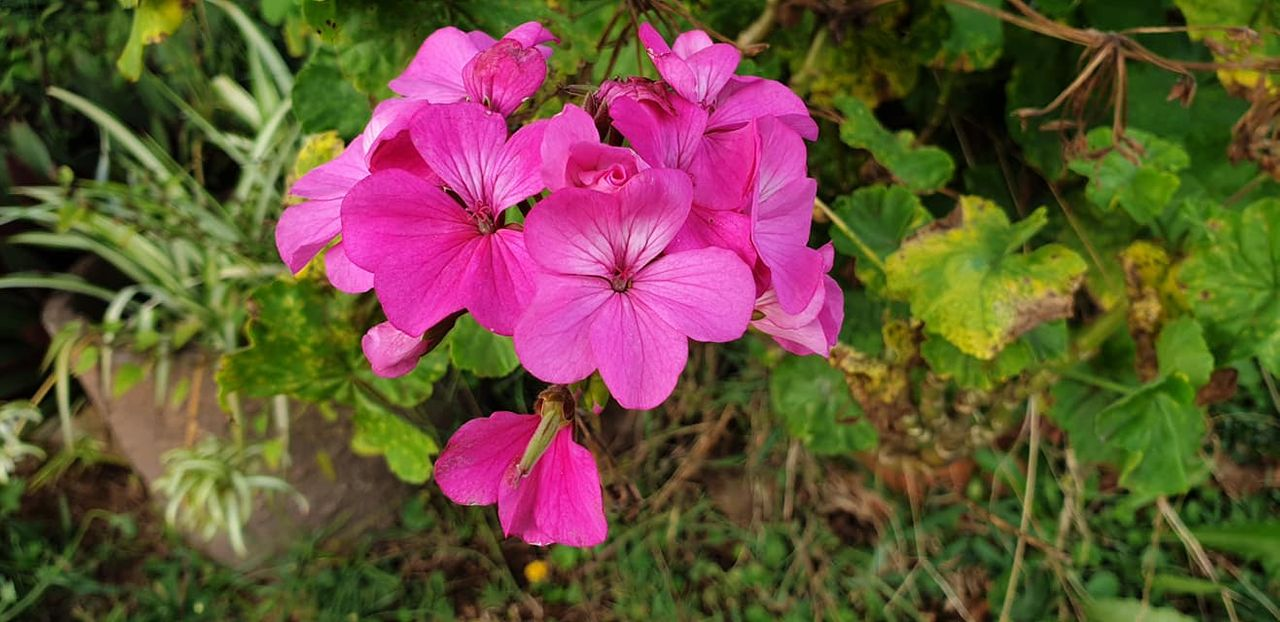 flower_25u.jpg