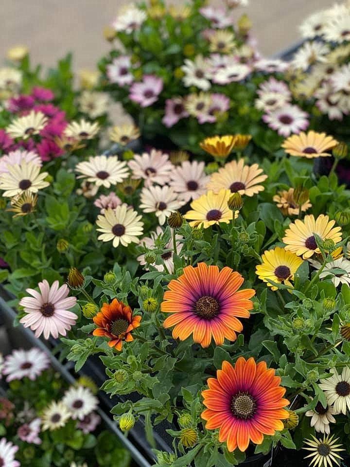 flower_18u.jpg
