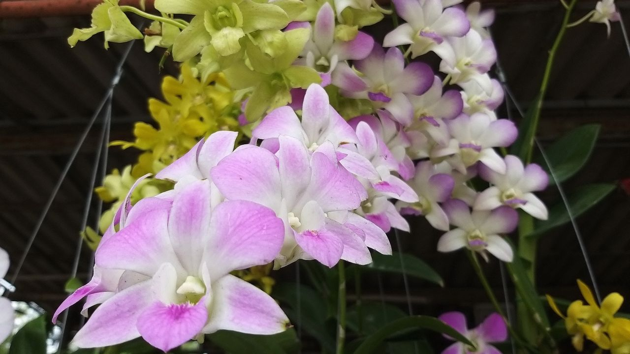flower_35u.jpg