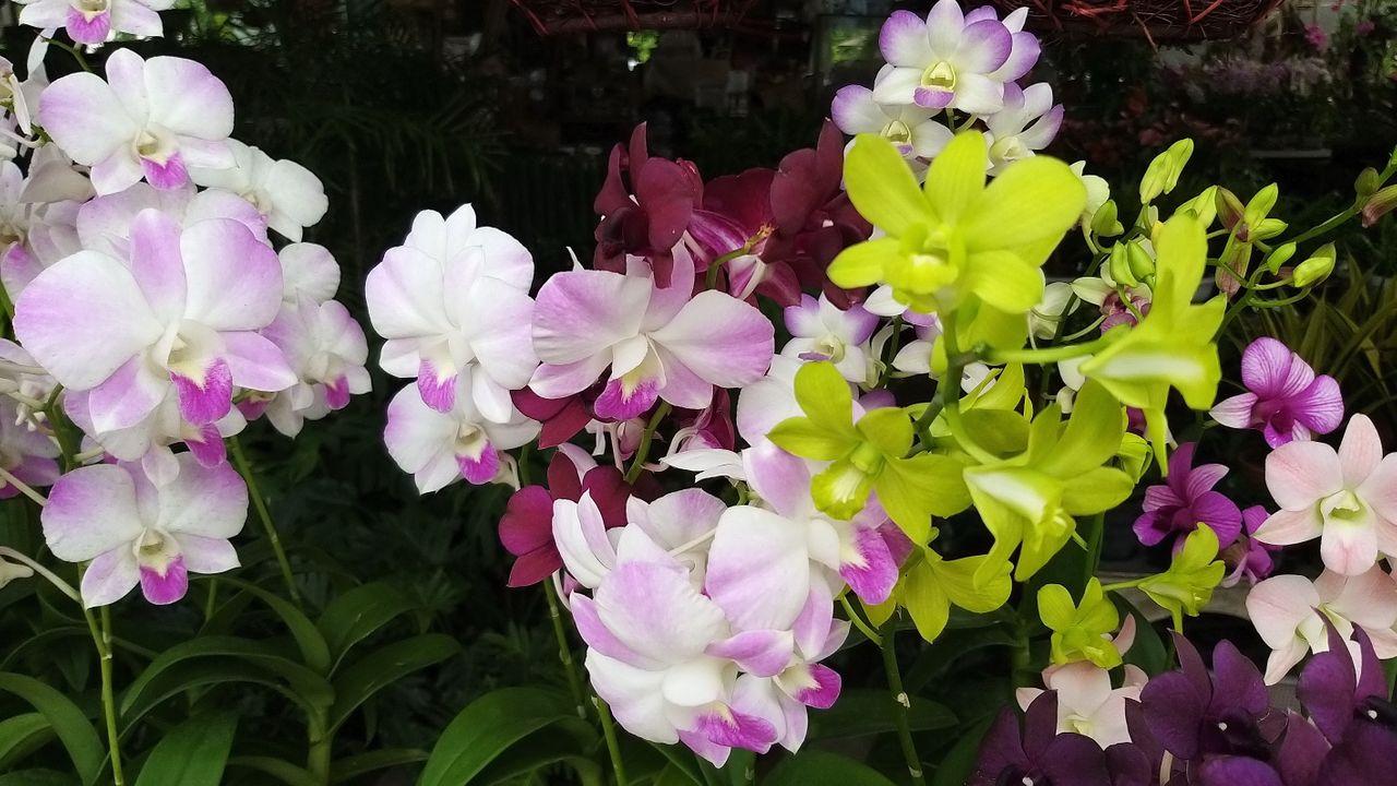 flower_31u.jpg