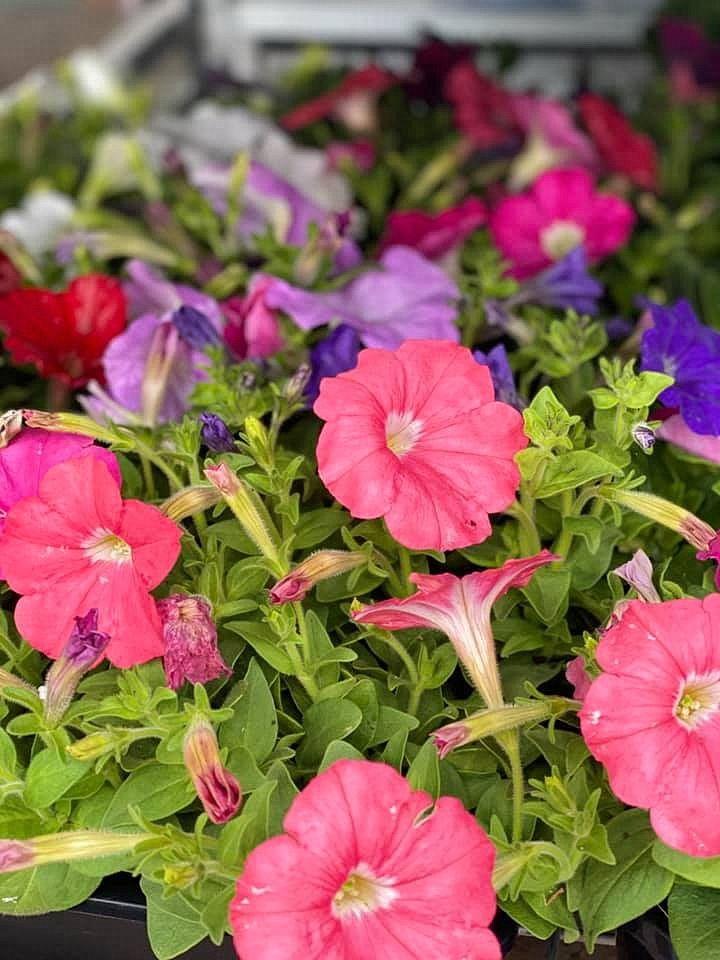 flower_20u.jpg