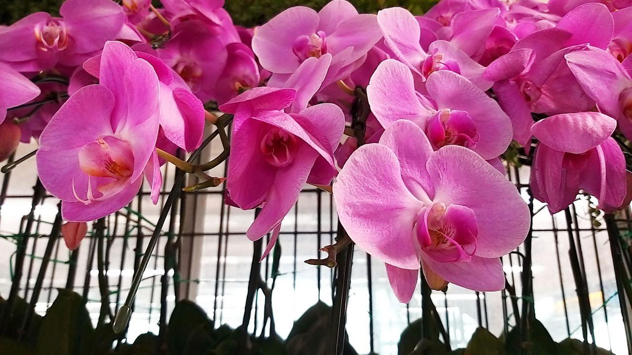 flower_36u.jpg