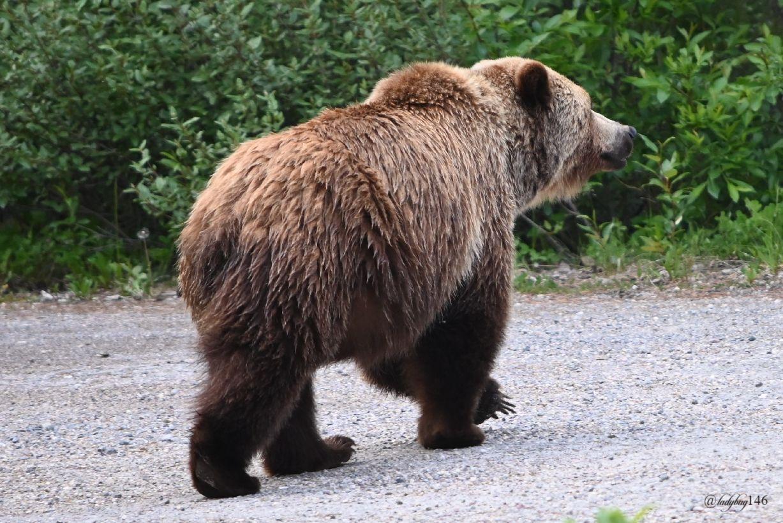 teddy (5).jpg
