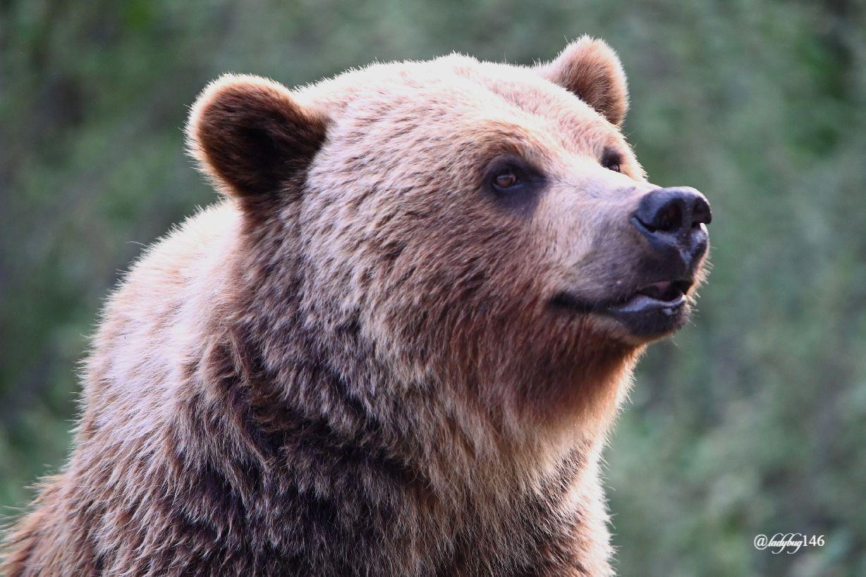 teddy (1).jpg