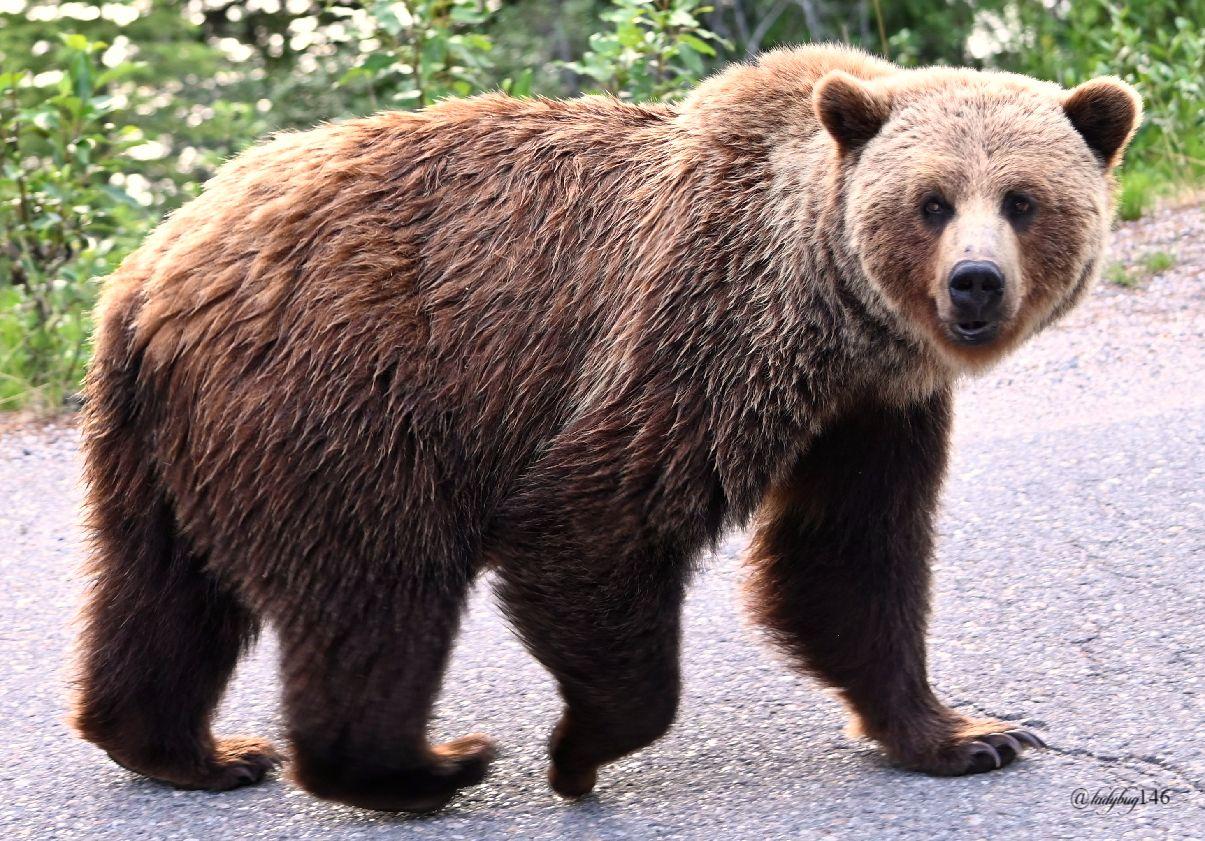 teddy (2).jpg