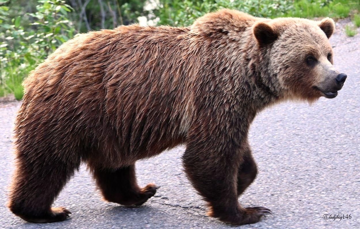 teddy (3).jpg