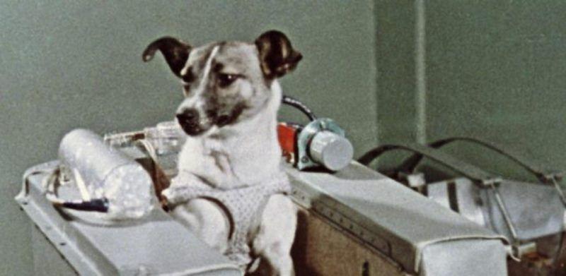 Laika-La-historia-de-una-perra-espacial-771-e1531331320719.jpg