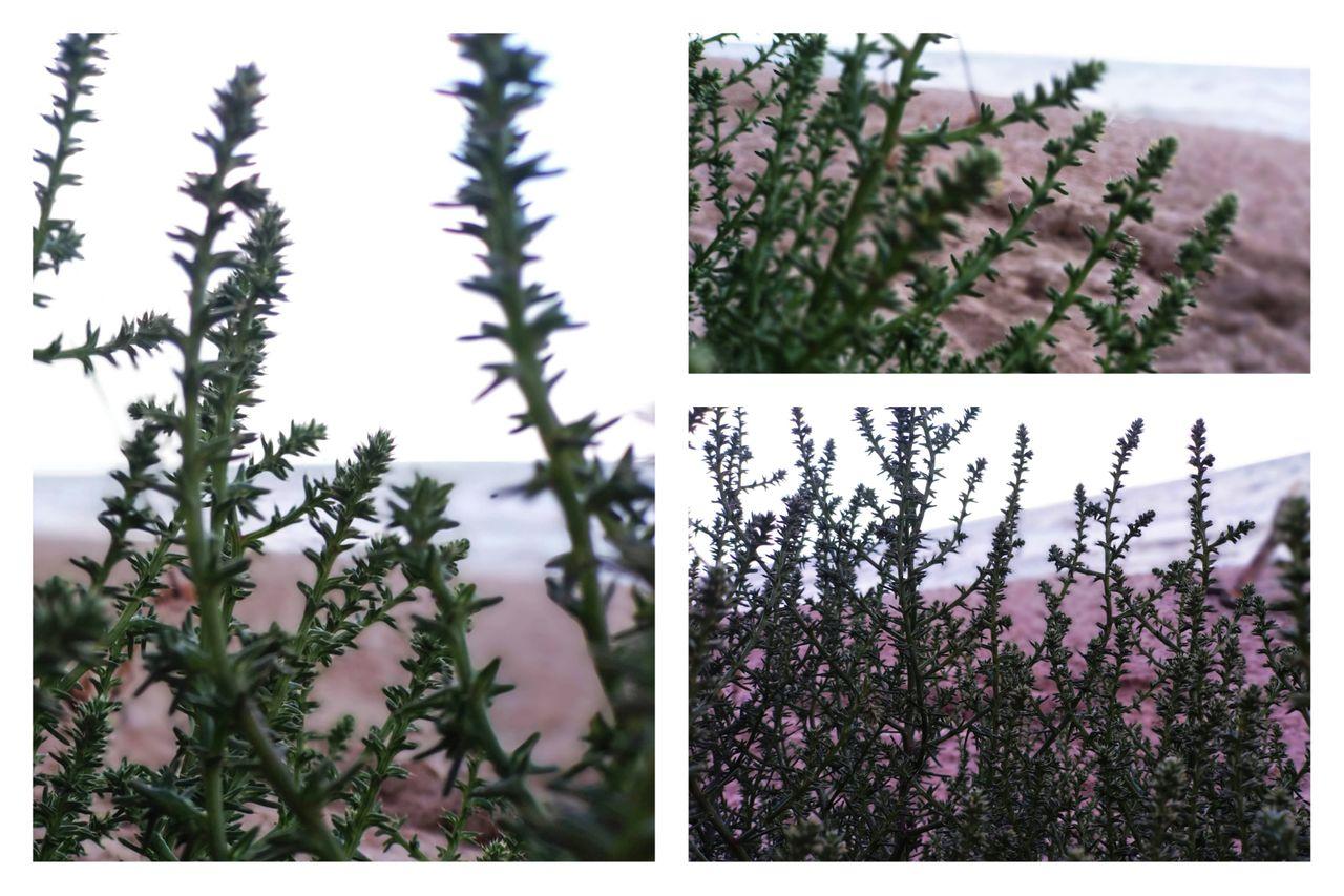 PicsArt_08-14-11.10.44.jpg