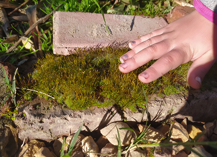 Moss covered brick.png