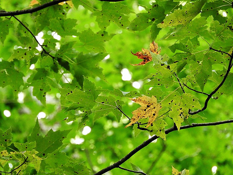 Green trees with hints of fall foliage